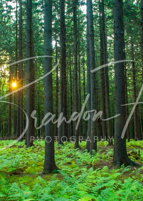 Pennsylvania woods at sunset