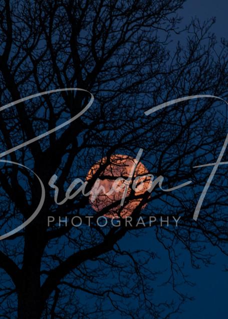 Pink Moon Tree Art | Brandon Hirt Photo