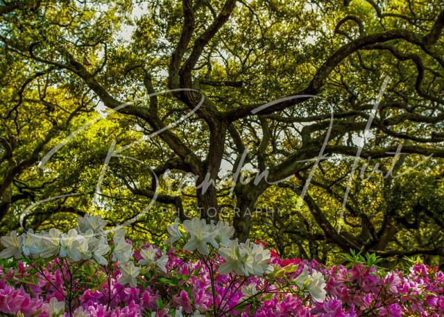 Charleston Flowers Art | Brandon Hirt Photo