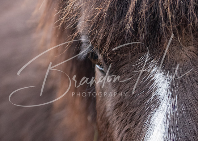 Skunk The Horse Art | Brandon Hirt Photo