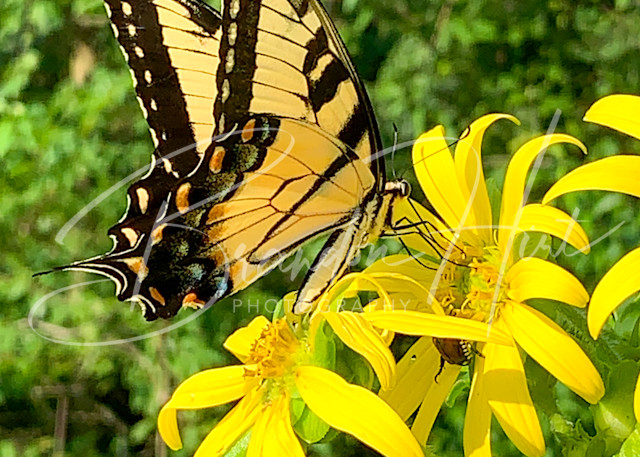 Butterfly at Brandywine Creek
