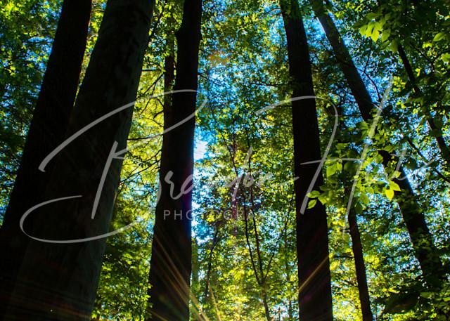 Cook Forest Sun Star Art | Brandon Hirt Photo