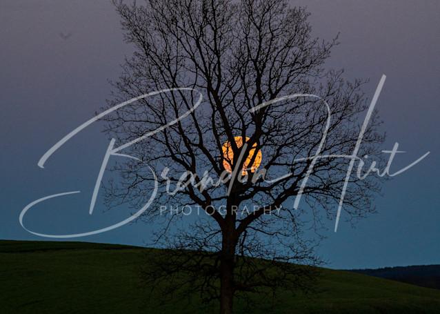 Super Moon In Tree Art | Brandon Hirt Photo