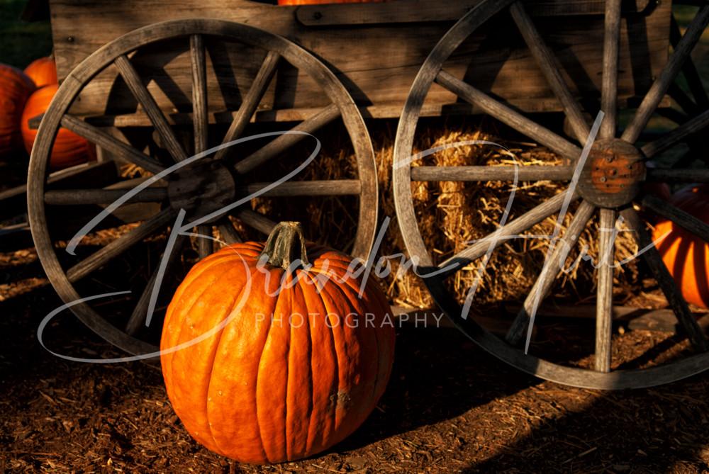Pumpkin Wheel Art   Brandon Hirt Photo