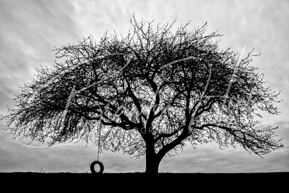 Tire Swing on an old apple tree