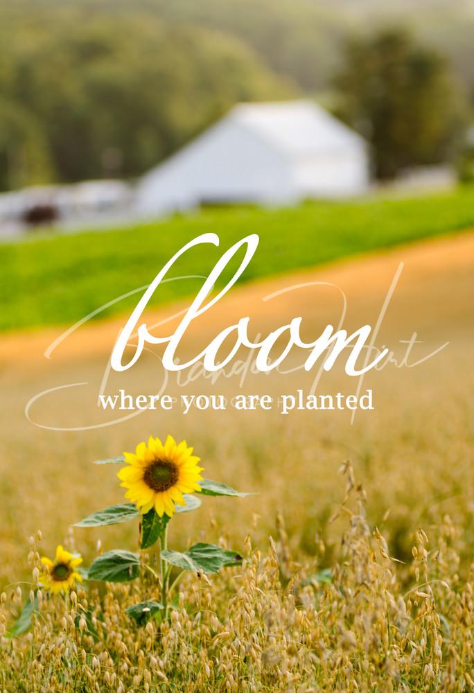 Bloom Art | Brandon Hirt Photo