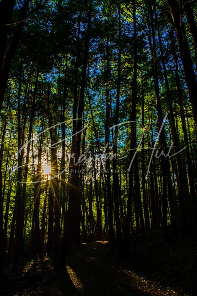 Cook Forest Sunset Art | Brandon Hirt Photo