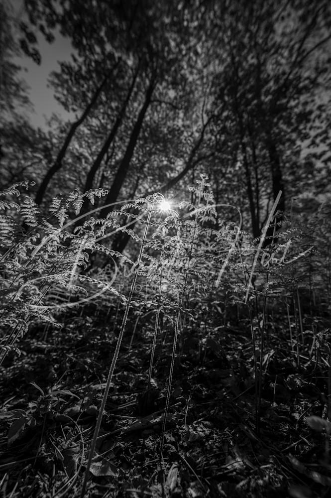 White Clay Morning Art | Brandon Hirt Photo