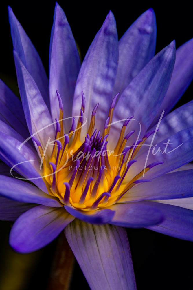 Flower Art | Brandon Hirt Photo
