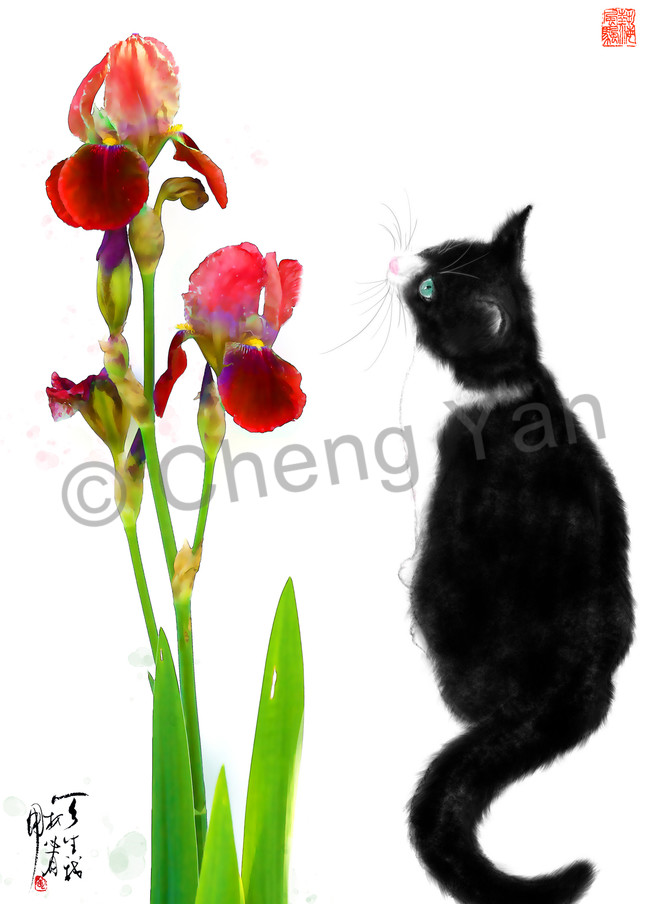 Cats 062 Photography Art | Cheng Yan Studio