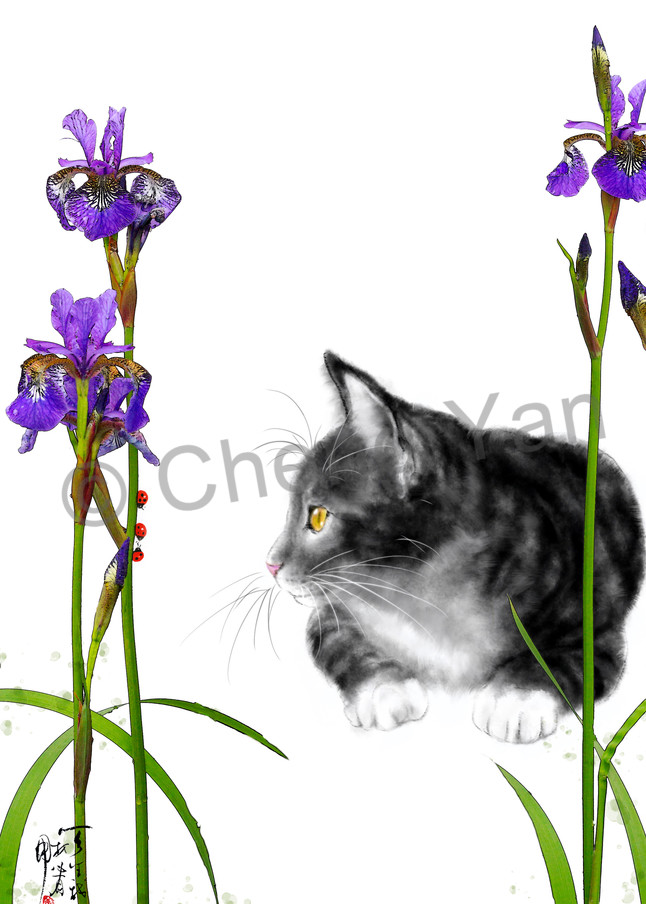 Cats 068 Photography Art | Cheng Yan Studio