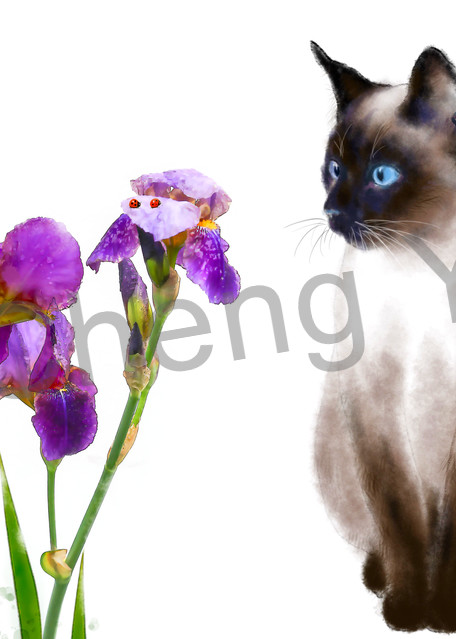 Cats 080 Photography Art   Cheng Yan Studio