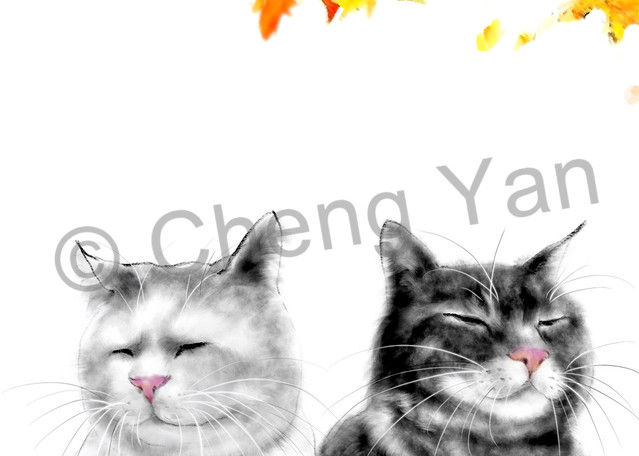 Cats 065 Photography Art | Cheng Yan Studio