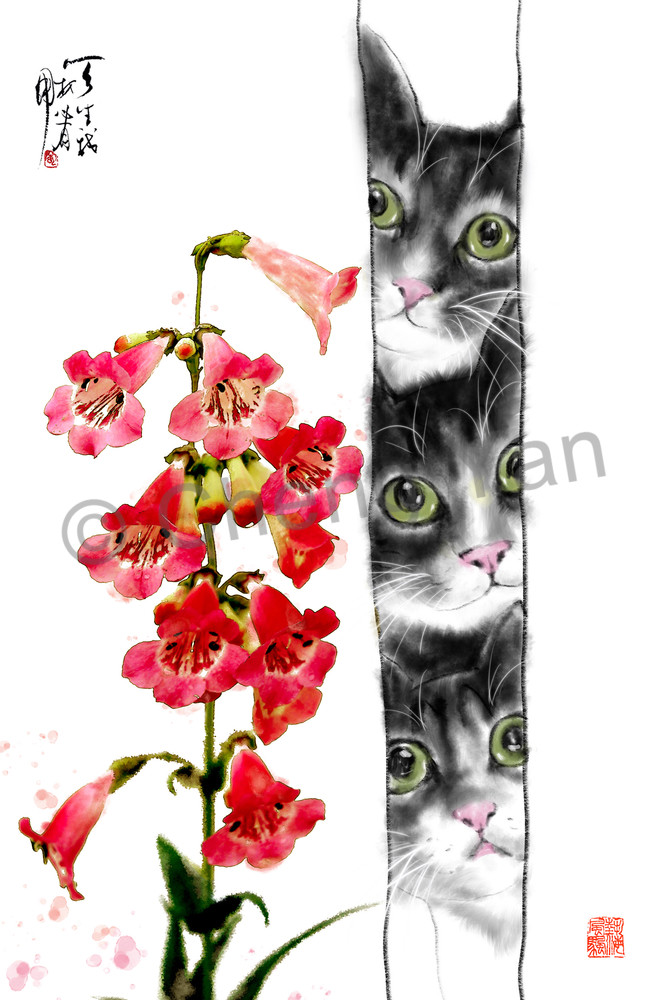 Cats 067 Photography Art | Cheng Yan Studio