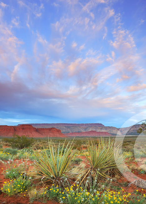 Warner Valley Desert Wildflowers Sunset Art Prints