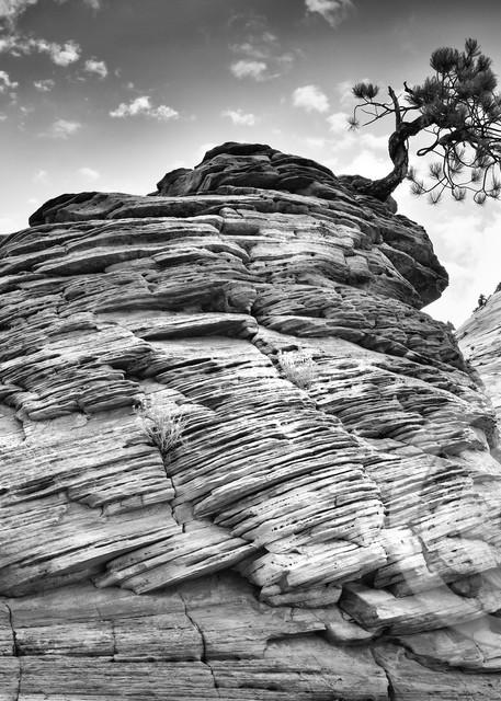 Black and White Zion Bonsai Tree Art