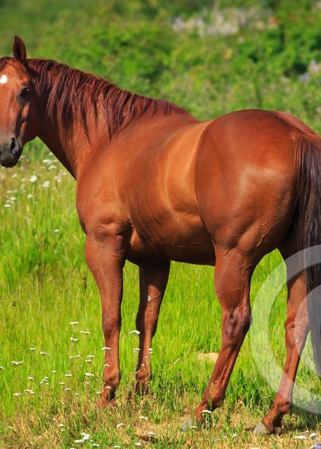 Beautiful Mare Horse Art Prints