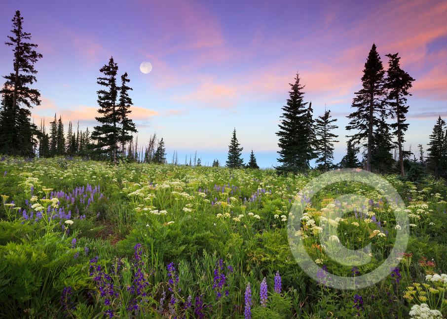 Wildflower Sunrise Art Prints