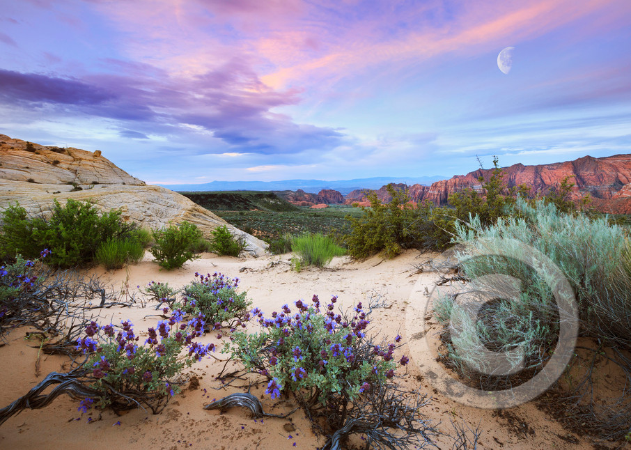 Snow Canyon Desert Sunrise Wildflowers Art Prints