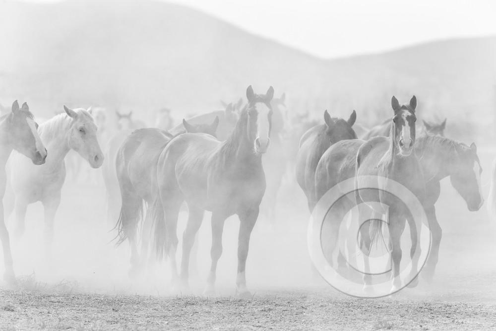 Black and White Horse Herd Art Photo