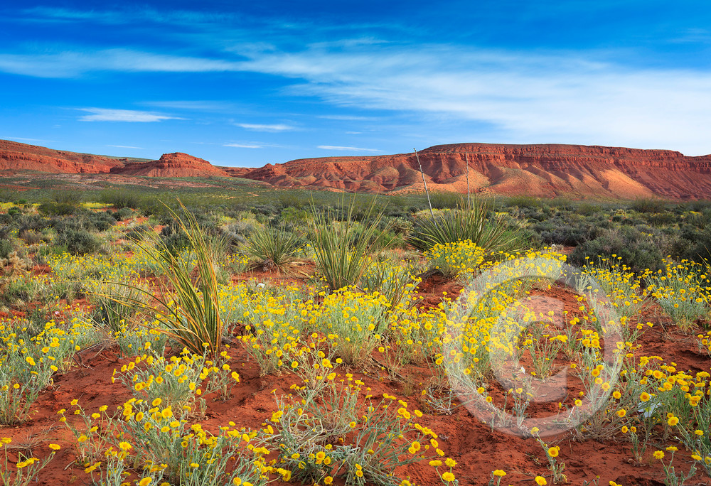 Fort Pearce Desert Wildflowers Art Prints