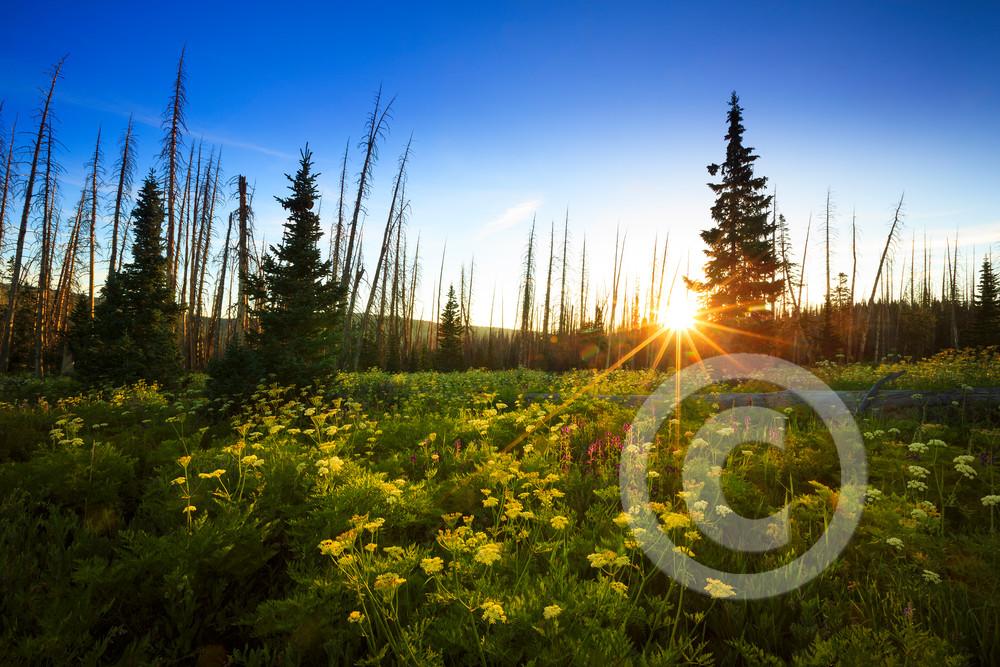 Cedar Breaks Wildflowers Sunrise Art Prints
