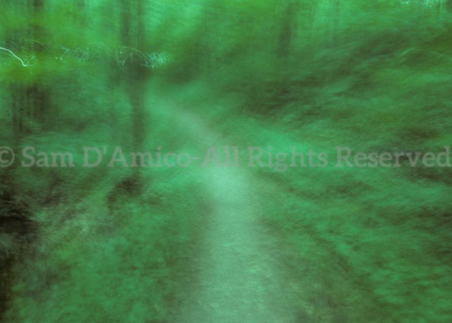 Walking In The Verdant Woods Near Prattsburgh, New York.