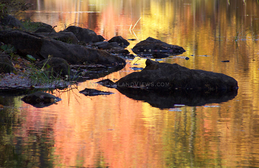 fall colorful leaves foliage golden reflections
