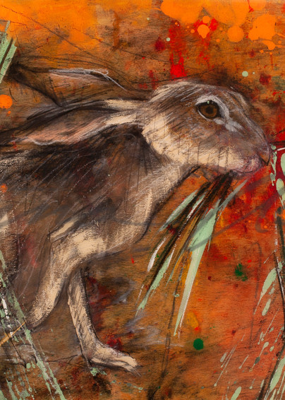 California Poppy series Jackrabbit eating grass art