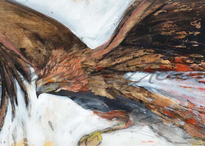 Raptor In Flight Art | Cristina Acosta Art & Design llc