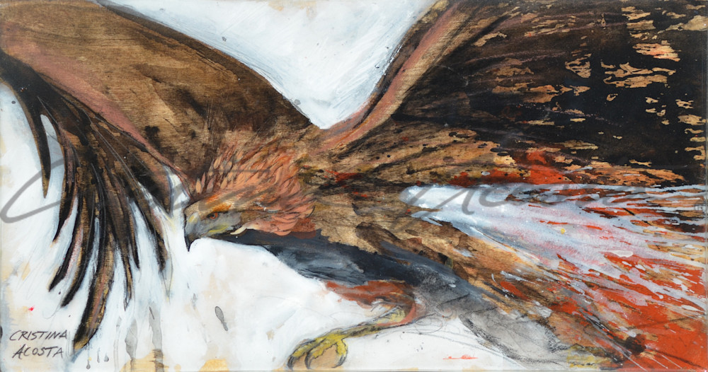 Raptor In Flight Art | Cristina Acosta Art & Design llc