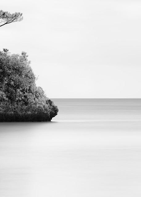 Tree & Rock
