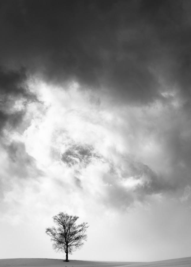Biei Tree