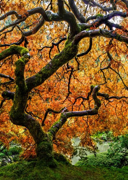 Tree of Zen in the Portland, OR Japanese Garden