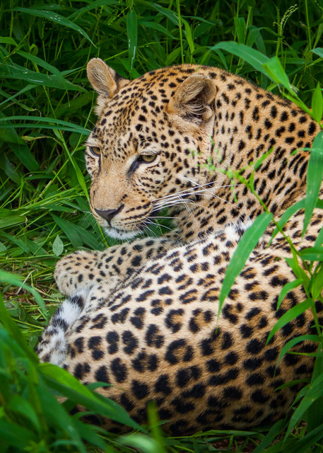 Africa, photography, leopard, South Africa, African Wildlife,