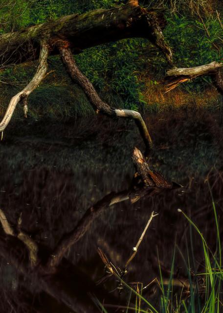 Fine Art Photographs of Assateague Reflection by Michael Pucciarelli