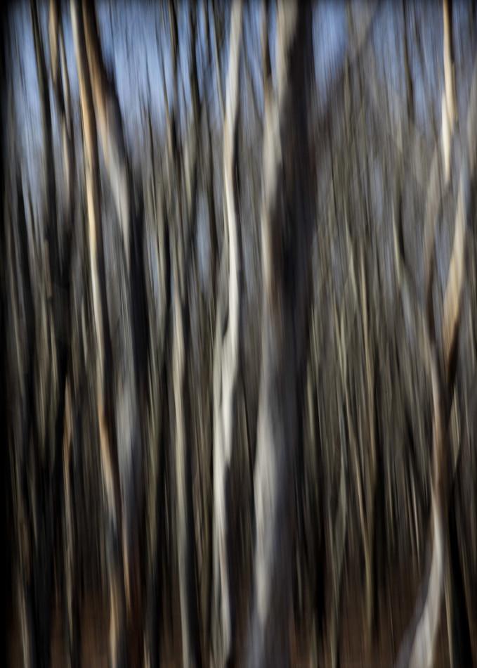 Winter Meditation #2 Photography Art | David Frank Photography