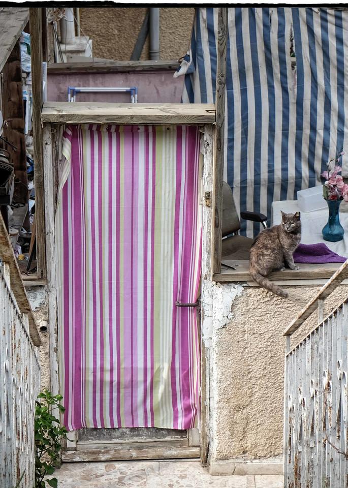 Jerusalem Of Cats Photography Art   David Frank Photography