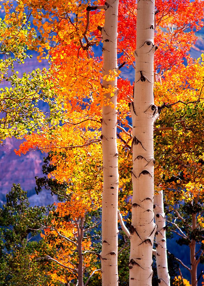 Autumn Sentinels Art | Fine Art New Mexico