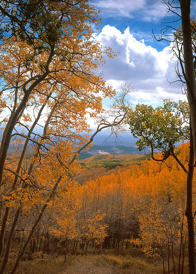 From The Aspens Art | Fine Art New Mexico