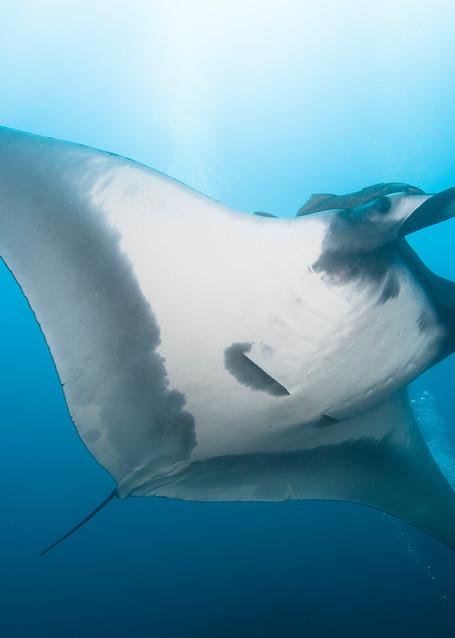 Manta Ray & Divers, San Benedicto Island, Mexico