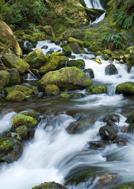 Bunch Creek, Quinault Rain Forest, Washington