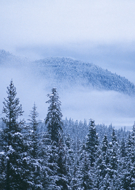 Early Snow 2