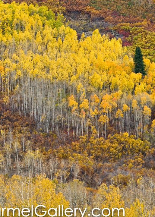 Aspen Cascade, Utah