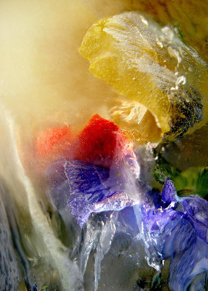 Icescape Unfurl Art   Fine Art New Mexico