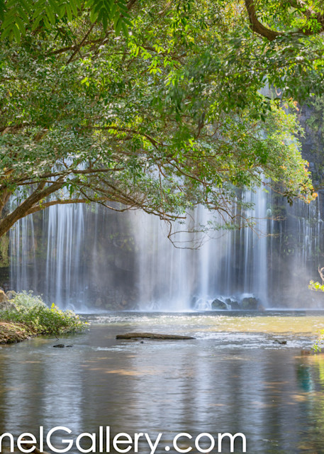 Rain Forest Watefall