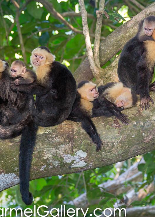 Rain Forest Monkey Family