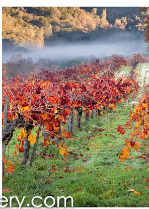 Autumn in Calistoga ALL