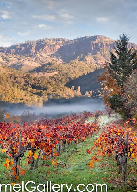Autumn in Calistoga