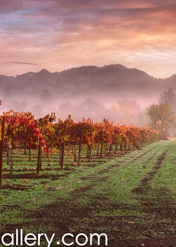 Autumn Sunrise Calistoga